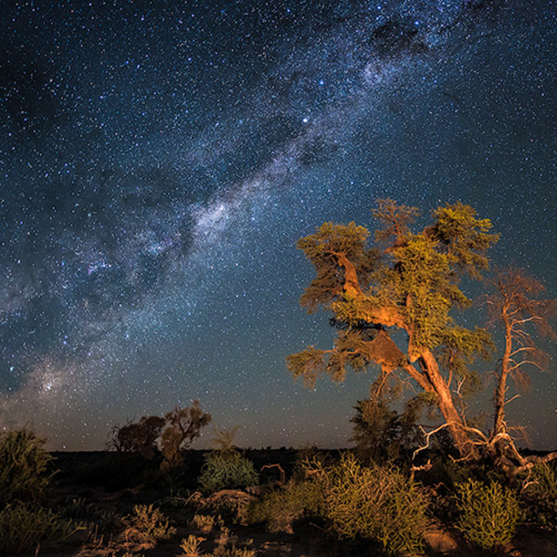 A tall Camel Thorn Tree stands proudly under the star-filled night sky. With the Milk Way burning brightly, a hidden moon brightens the Kalahari sky.